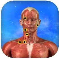 Massage Trigger Points App on iTunes